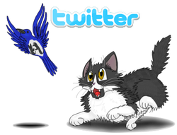 Cat Chase Bird Twitter Button