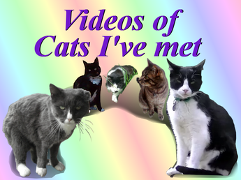 Videos of Cats I've Met